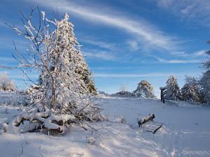 Winterstimmung - Schneebedeckte Hochheide am Kahlen Asten