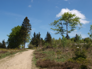 Manchmal reicht schon ein kurzer Spaziergang in der Natur um abzuschalten.