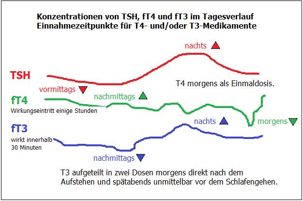 TSH, fT3 und fT4 schwanken im Tagesverlauf